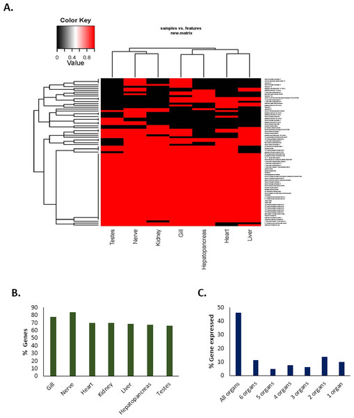Tissue-specific expression/occurrences of important genes associated with pH balance or ion-regulation in Redclaw crayfish (Cherax quadricarinatus).
