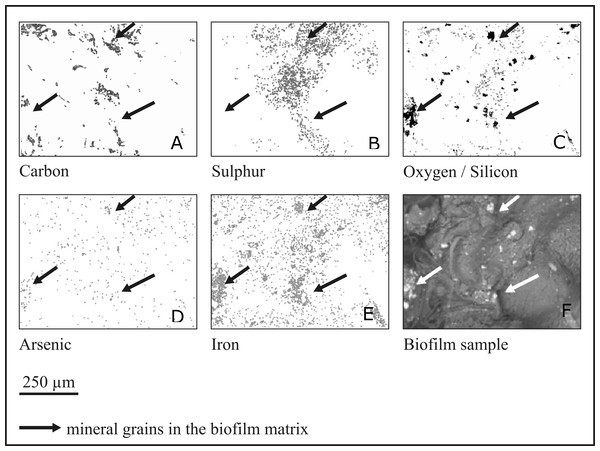 Mapping of elements in the rock biofilm sample.