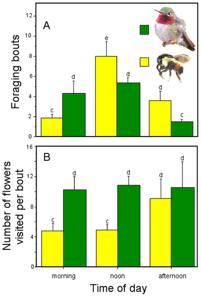 Foraging behavior throughout the day by hymenopteran and hummingbird floral visitors of Penstemon gentianoides.