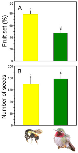 Effectiveness of bumblebees and hummingbirds as pollinators in Penstemon gentianoides.