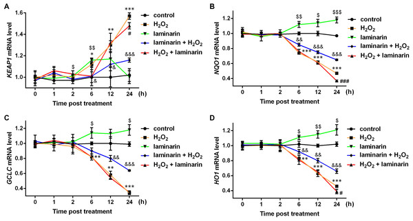 mRNA level change of KEAP1, NQO1, GCLC and HO1 by H2O2 and laminarin in MRC-5 cells.
