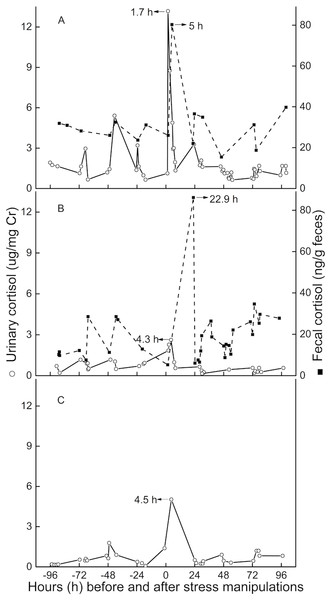 Longitudinal profile of urinary and fecal cortisol concentrations for three golden snub-nosed monkeys (Rhinopithecus roxellana) (TT, QQ, and SN) following stress manipulation.