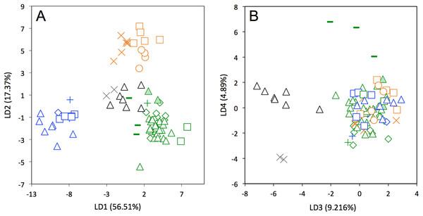 Linear Discriminant Analysis (LDA) performed on cranial shape coordinates of Dasypus novemcinctus (A, LD1 vs LD2; B, LD3 vs LD4).