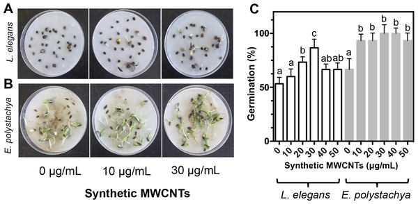 Effect of synthetic MWCNTs on the seed germination rate of Lupinus elegans and Eysenhardtia polystachya.