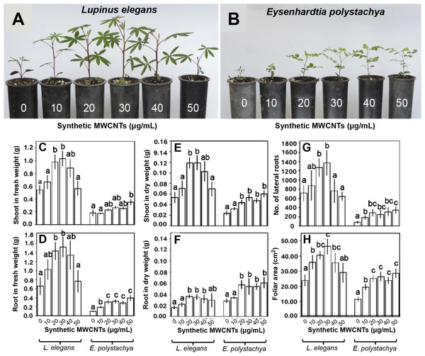 Effect of synthetic MWCNTs on the plant growth rate of Lupinus elegans and Eysenhardtia polystachya.