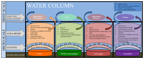 Interactions between macro-organisms and microbial communities on a reef space.