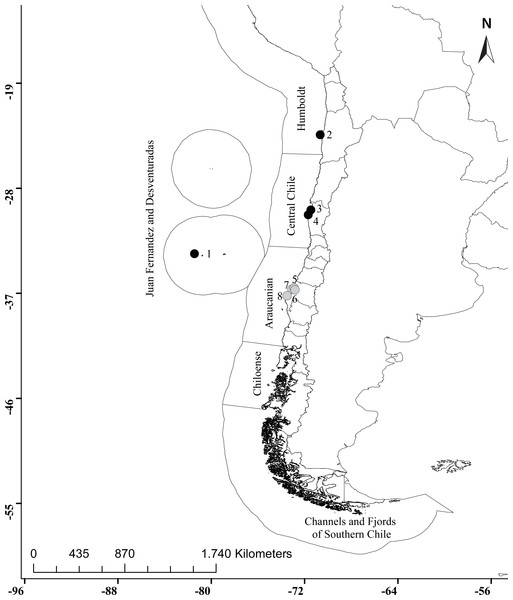 Distribution of Asterocarpa humilis along the Chilean coast.