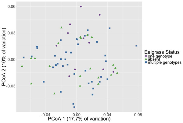 Initial microbial community composition is not correlated with eelgrass presence/absence.