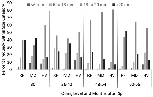 The relative frequency of juvenile (<6 mm shell length), subadults (6–13 mm), small adult (13–20 mm), and large adult (>20 mm) shell length categories of Littoraria irrorata yearly from the beginning of the study at 30 months after the spill to 66 months after the spill.