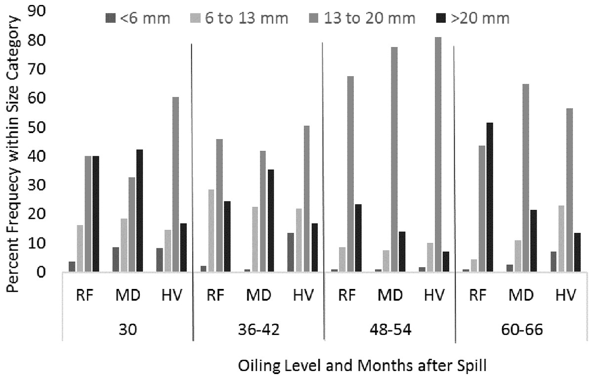 Shoreline oiling effects and recovery of salt marsh