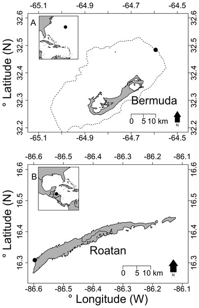 Map showing location of deepest observed lionfish for (A) Bermuda and (B) Roatan, Honduras.
