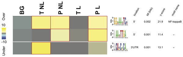 Overrepresentation patterns of the putative cis-regulatory elements across the four phenotypes.