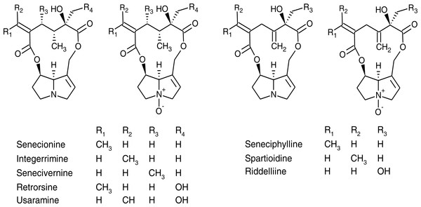 Chemical structures of pyrrolizidine alkaloids and their corresponding N-oxides identified in Senecio vulgaris plants.