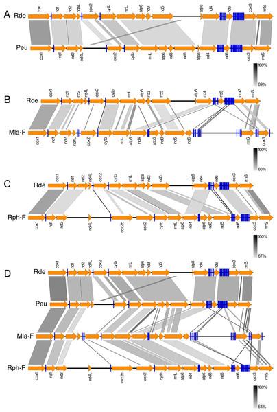 Comparison of gene order in venerid mtDNAs.