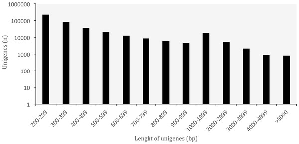 Length distribution of unigenes from Oreobates cruralis.