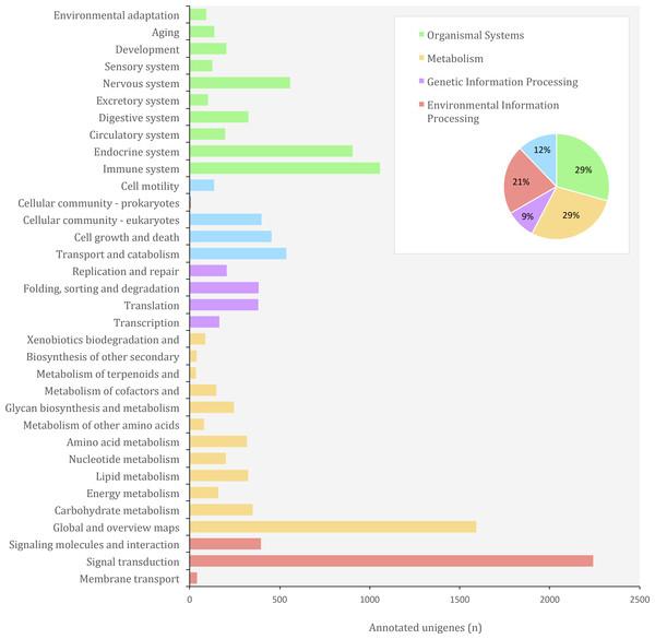 Distribution of KEGG Orthology (KO) categories in the transcriptome of O. cruralis.