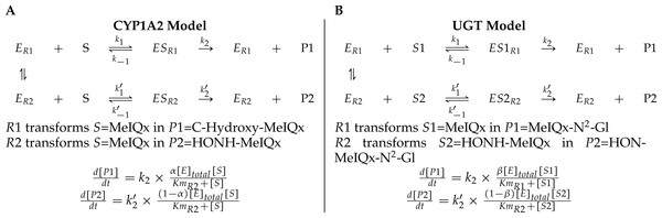 A generic model for the competition of reactions which are catalyzed by the same enzyme.