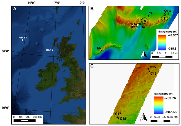 (A) Mingulay Reef Complex (MRC) and PISCES area location offshore Scotland. (B) Colonies 1 to 14 (C1 to C14) locations within MRC. Note that colony 5 (C5) is the only colony located on Banana Reef. (C) Colonies 15 to 18 (C15 to C18) locations within PISCES area.