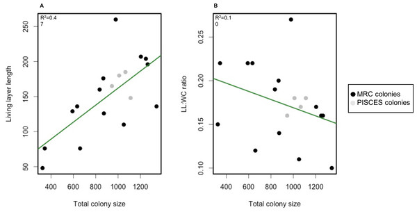 Scatterplot of living layer thickness (A) and LL : WC ratio (B) as a function of total colony sizes.