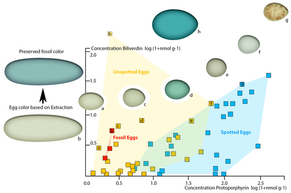 Plot of oviraptor egg and different avian egg biliverdin concentrations against their protoporphyrin concentrations with example for the overall color impression based on the dataset published by Cassey et al. (2012).