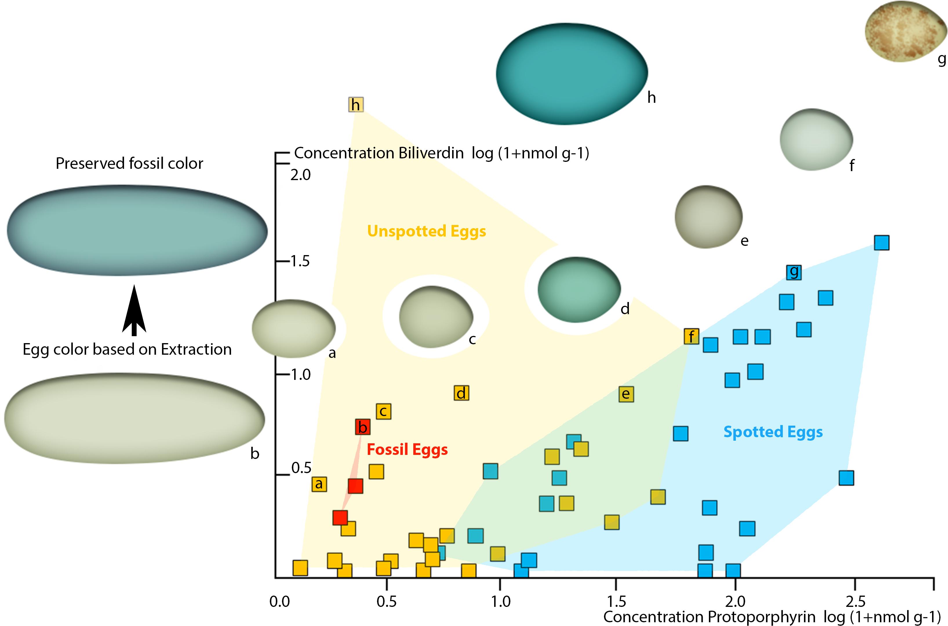 Dinosaur origin of egg color oviraptors laid blue green eggs peerj download full size image pooptronica