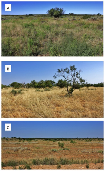 Photographs of range sites delineating (A) excellent, (B) moderate, and (C) poor bobwhite habitat conditions.