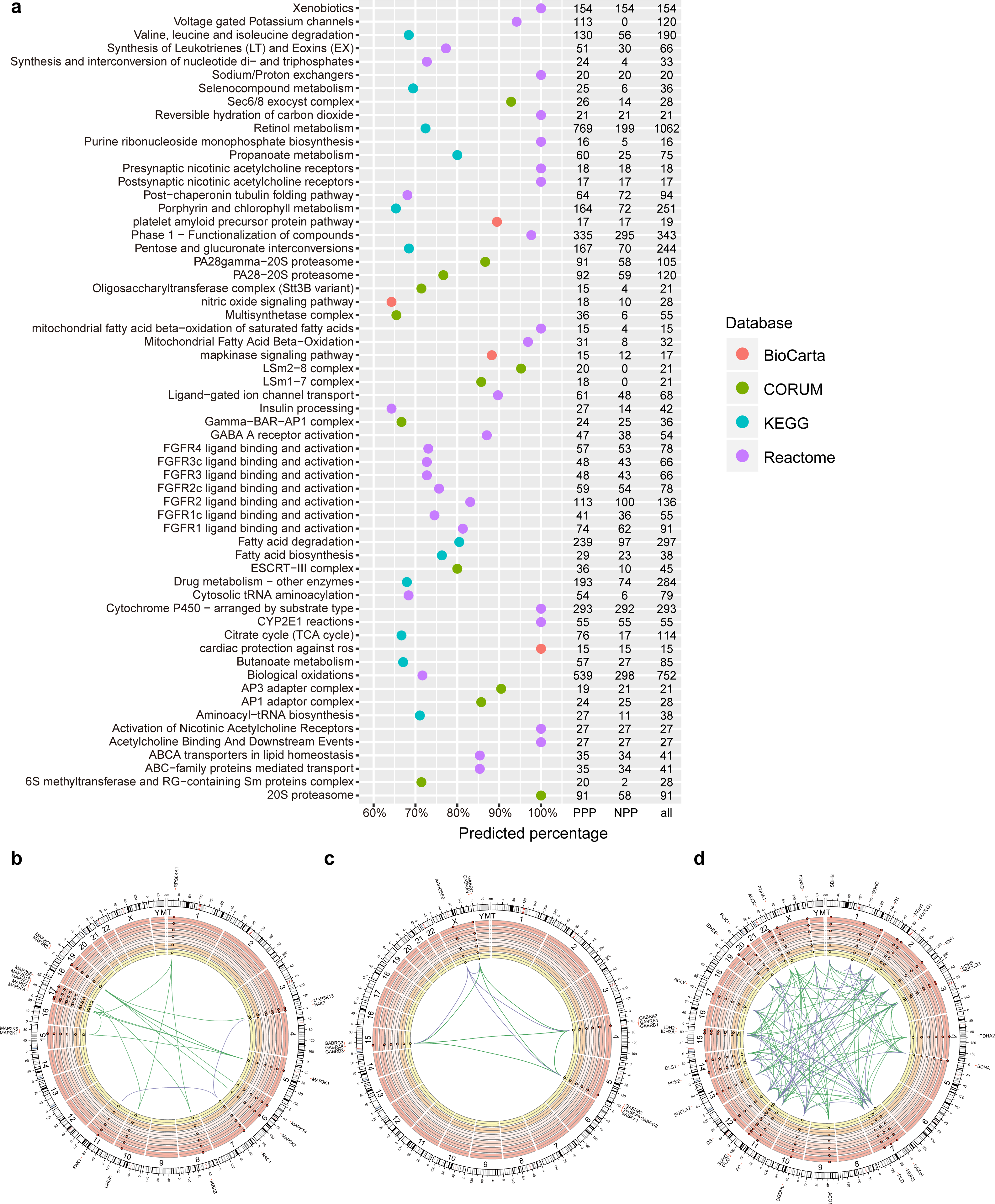 PrePhyloPro: phylogenetic profile-based prediction of whole