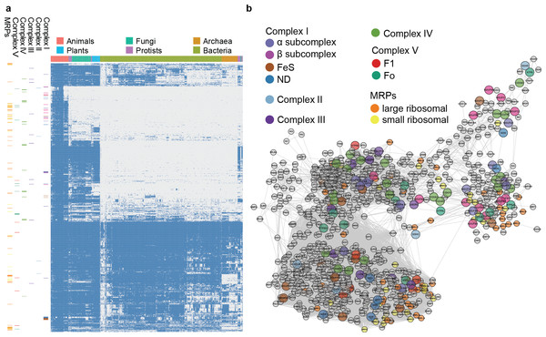 Phylogenetic profile and network visualization of human mitochondrial proteome.