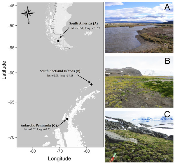 Sites where individuals of Colobanthus quitensis were collected: (A) South America (SA: 53.5°S), (B) Shetland Islands (SI: 62.1°S) and (C) Antarctic Peninsula (AP: 67.5°S).