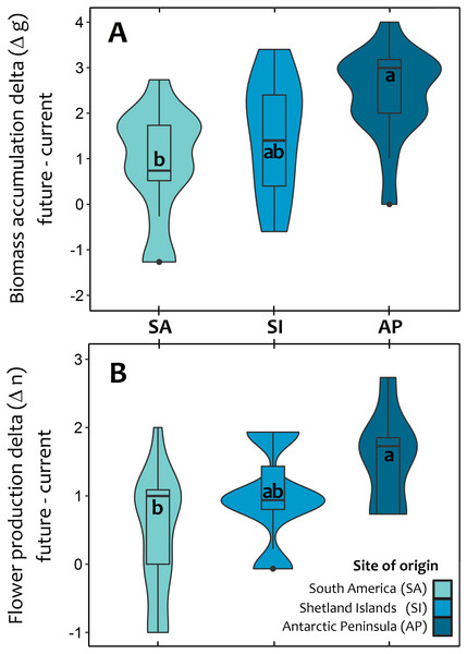 Violin plot for the average response of Colobanthus quitensis from three different latitudinal origins: South America (SA: 53.5°S), Shetland Islands (SI: 62.1°S) and Antarctic Peninsula (AP: 67.5°S) to experimental warming.