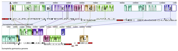 Progressive Mauve analysis comparing the cpGenomes of Etl. pomquetensis and Etl. gymnastica.