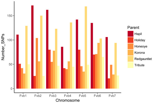 Numbers of SNPs from each parent represented on linkage groups aligning to Fragaria vesca chromosomes.