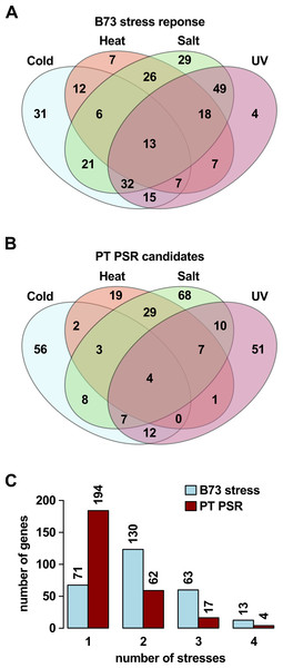 PSR candidates may respond to multiple stresses in B73.