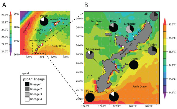 Map of Amami Oshima Island (A) and Okinawa-jima Island (B) with average sea surface temperature (SSTavg) and Symbiodinium psbAncr lineage ratios at each site investigated.
