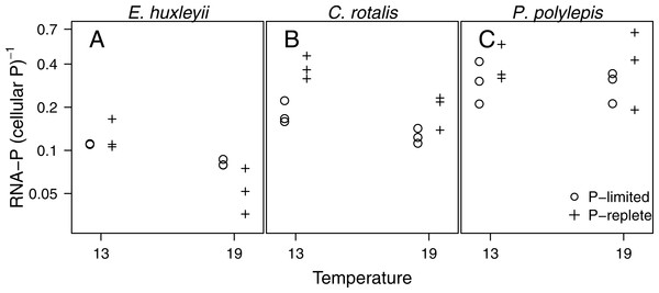 The fraction of P in RNA (i.e., moles of P bound in RNA: moles of total cellular P) plotted as a function of temperature and P-regime for each species.