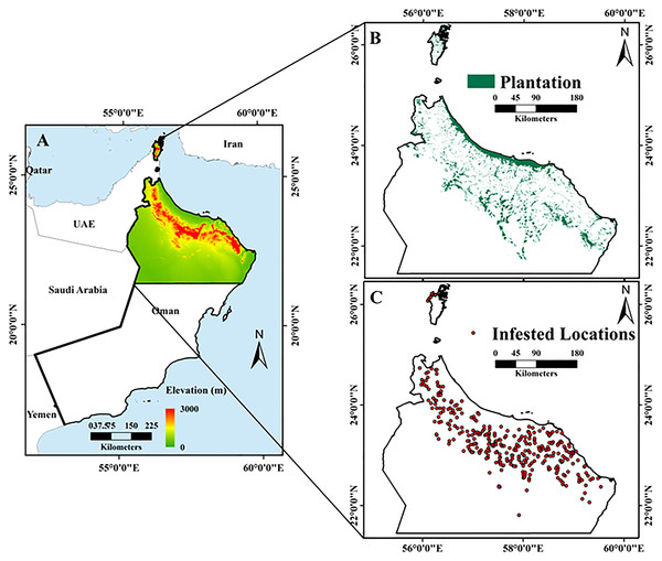 Maps of the study area, including: (A) topography and location of Oman, with the study area outlined by the black rectangle; (B) elevation change within the study area; and (C) distribution of date palm plantations in the study area (Esri ArcGIS 10.3).