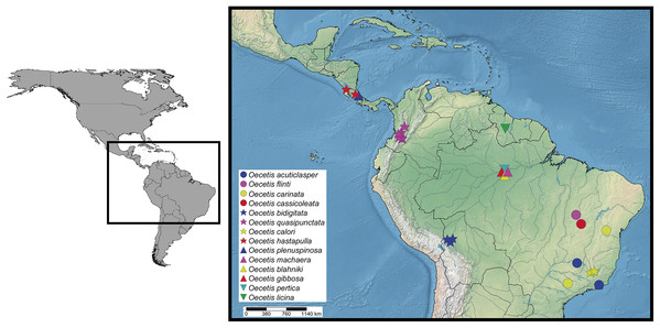 Distribution of the 14 new species of Oecetis based on the specimens presented on material examined sections.