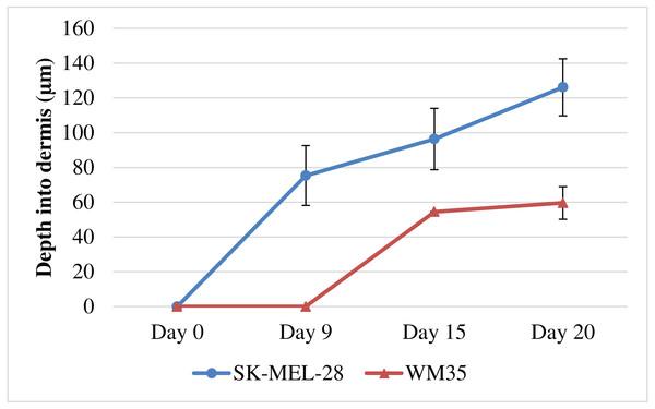 Quantification of melanoma cell invasion depth.