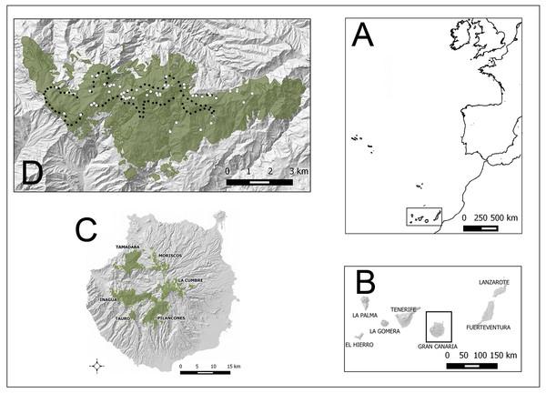 Study areas (green) in Gran Canaria island (Spain).