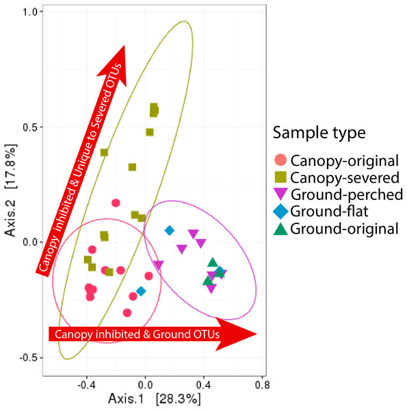 Shifts in bacterial community composition associated with canopy-severed compared to ground-perched and ground-flat treatments with canopy-original and ground-original representing the original community compositions.