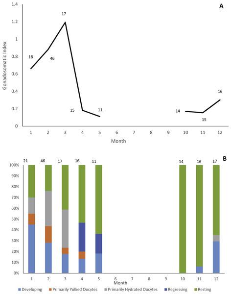 Reproductive seasonality of jolthead porgy.