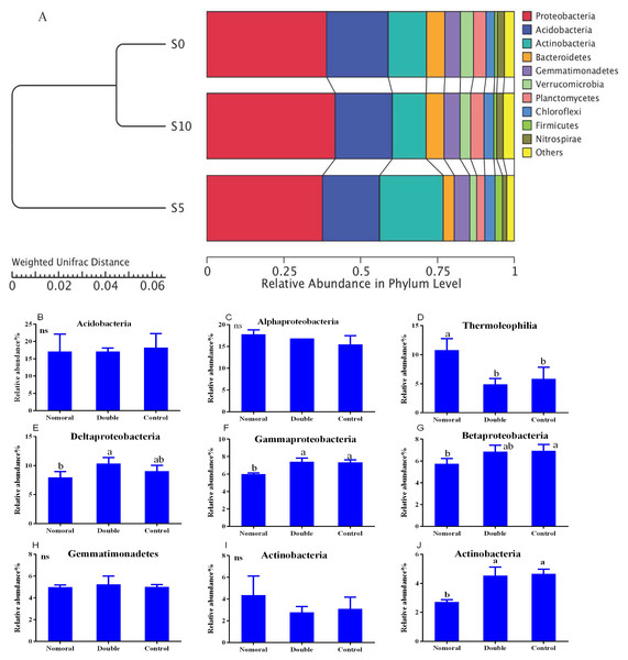 Soil bacterial communities under different litter quantities at the phylum level (A) and class level (B).