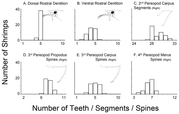 Variability in selected characters of systematic relevance in shrimps bought at aquarium stores in southeastern USA.