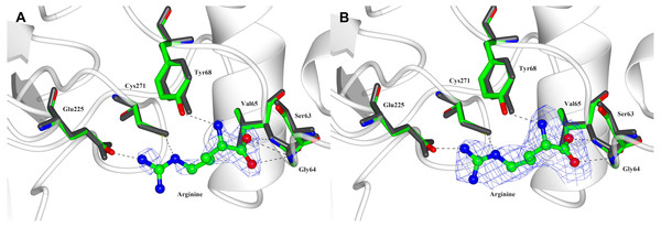 Arginine binding-site of PpAK.