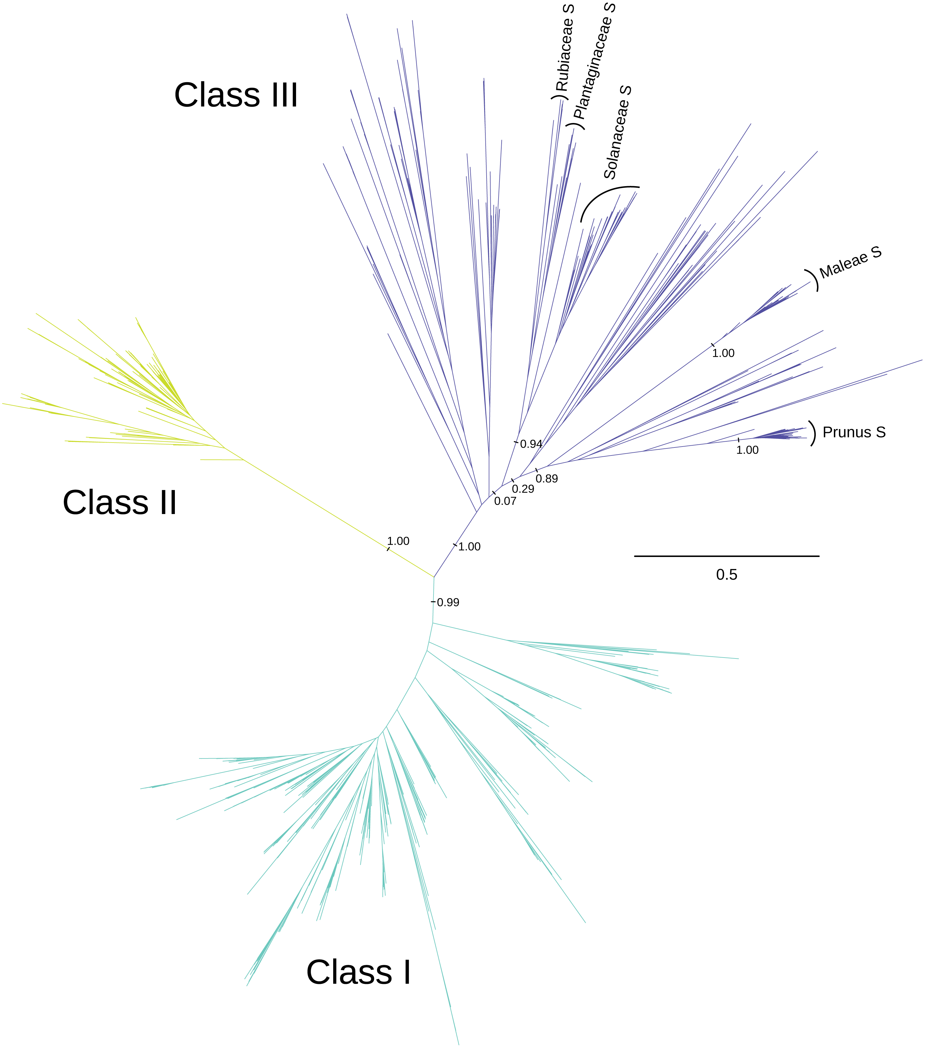 The evolutionary history of plant t2s type ribonucleases peerj download full size image pooptronica