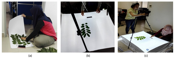 Experimental setup. (A) Leaf compression, (B) Background setup, (C) Overview of experimental setup.