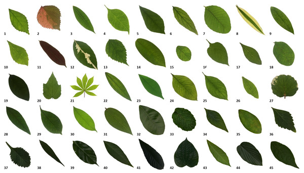 Samples of the leaf images in the myDAUN dataset.