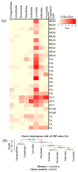 "(A) Heatmap based on hierarchical clustering using Bray–Curtis resemblance matrix of spider taxa abundance at Minqing, where: ""BRAS"", Brassica; ""PUMP"", pumpkin; ""FAL"", fallow land; ""TA"", taro; ""NCV"", Non-crop vegetation; and ""FM"", Field margin. (B) Cluster plot to test the goodness of hierarchical clustering for abundance of spider families at Minqing."