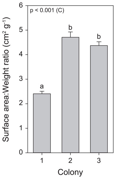 Surface area to weight ratio values for the three colonies of S. pistillata.