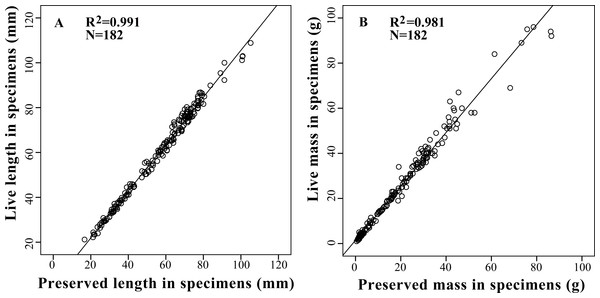 Relationships between live body length (A) and body mass (B) with preserved body length (A) and body mass (B) in 13 tailless amphibian species. Regression line represents the slope of correlation between live and preserved variables with a R2 of 0.99 for body length and 0.98 for body mass.